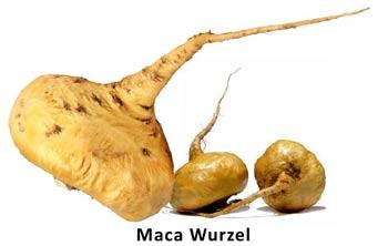 Maca Wurzel
