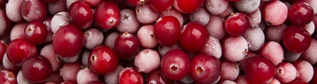 Cranberrys haben einen abnorm hohen Gehalt an sekundären Pflanzenstoffen